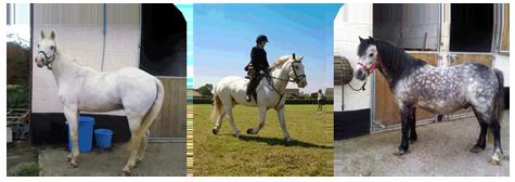 Own Horses