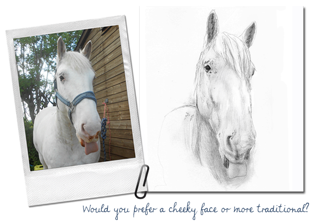 Emily Mayman The Equine Artist Photo Guide